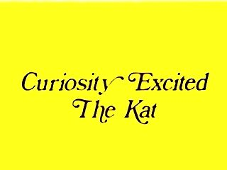 Curiosity Excited The Kat
